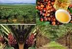 Kolaborasi Penelitian Ilmiah untuk Memperkuat Posisi Indonesia di Forum TBT WTO