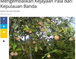 Mengembalikan Kejayaan Pala dari Kepulauan Banda